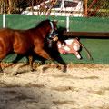 Wir haben es schon lange geahnt: ein echtes Cowhorse!!!