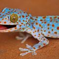 rear lizard
