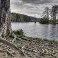 Loch Garten Cairngorm National Park