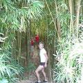 Mitten im Bambuswald