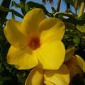 Bunte Flora