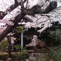 神仏習合・摩利支天堂の前の狛猪