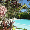 Caoba Residence Las Terrenas - Dominican Republic