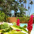 Vue piscine Caoba à Las Terrenas