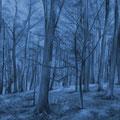 Waldstück • 2009 • Acryl auf Leinwand • 100 x 140
