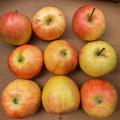 2015/KW42 -  Apfel Gala Royal BIO