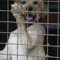 Gitter sind für Verbrecher - nicht für Tiere!