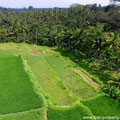 Land for sale Ubud.