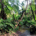 Ubud land for sale, Bali.