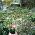 Gestaltung von Vorgarten nach Kundenwunsch
