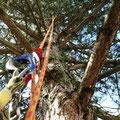Baumpflege auch bei schwer erreicbaren Bäumen