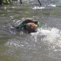 ...im Wasser wird sie von Baya verfolgt, ist aber noch schneller ...