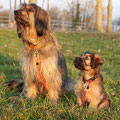 Floris und Baya 9 Wochen alt