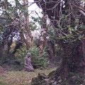 Brigit's Garden Naturpfad