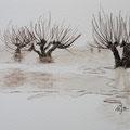 Weiden im Winter  10 x 15 cm