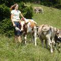 Ab und zu besuchen wir unsere Rinder auf der Alp.