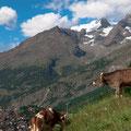 スイス・アルプスの風景(2009.08)