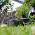 müde im Garten...