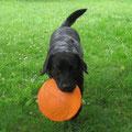 Frisbee kann ich auch