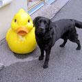 früher waren Enten auch mal kleiner