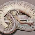 Cinnamon Super pastel (Sterling Pastel)