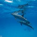 Dolphinhouse Sataya