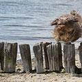 Ich springe für mein Leben gerne über Hürden, egal wie sie aussehen