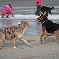 Vierbeiner am Hooksieler Strand