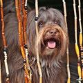 mein liebster Rückzugsort, die große Hundehütte in unserem Garten...