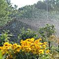 nach der Bewässerung konnten wir dann alle mal wieder richtig durchatmen...