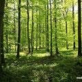 der Kellenhusener Wald