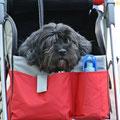 Evy in ihrem Hundewagen, so konnte sie immer und überall dabei sein