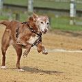 das ist der 15jährige Hundeoldie