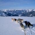 Wistätthorn: die steile Gipfelflanke läuft flach aus in ein unberührtes Plateau mit phantastischer Ausssicht (bevor uns eine ruppige Abfahrt über einen steilen Rücken ins Schwitzen bringt)