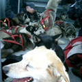 17 Hunde in der Gondel der Luftseilbahn