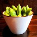 枝豆です。取りやすいように縦に並べてみました。とても入れにくかったです。