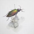 Laufkäfer, Zeichenkurs in der Entomologischen Sammlung Krefeld