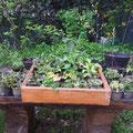 Pflanztisch im Garten
