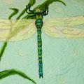 Libelle - Ausschnitt