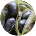 黒大豆のエダマメ
