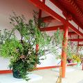 回廊西側の生け花(京都御所)