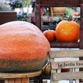 鑑賞用かぼちゃ