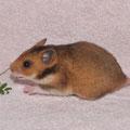 D-13 *Püppi* Weibchen wohnt bei Saskia E.