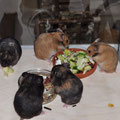 5 Mädels beim Dinner, rechts die kleinen freche *Fibi*