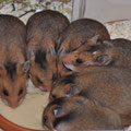 Die 6 Schwestern beim Frühstückssnack
