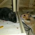 *Mathilda&Toffi*erobern ihr neues Zuhause,noch eine Woche zusammen