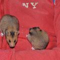 Tapsy & Lotti am klettern auf dem Sofa