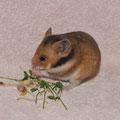 D-12 *Lotti* Weibchen wohnt bei Steffi M.