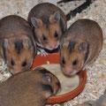 4 Brüder bei Snack