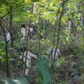 Construccion del puente Kogui - Reserva Biológica Caoba